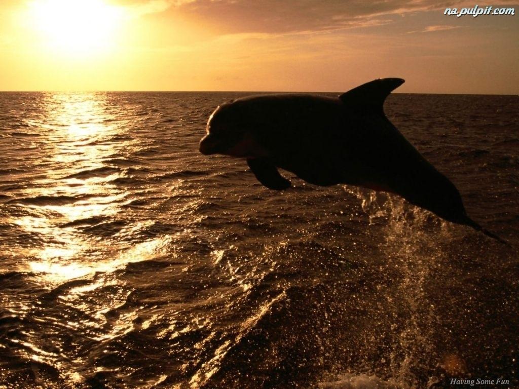 Tapeta delfiny morze palmy picture